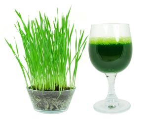 Wheatgrass Juice Ke Fayde, Wheat grass Benefits in Hindi