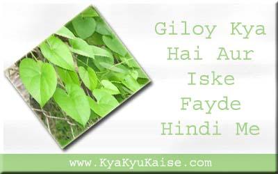Giloy kya hai, Giloy ke fayde hindi me