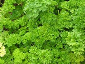 parsley in hindi