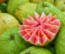 guava in hindi