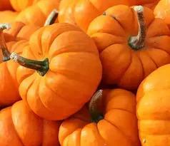 pumpkin in hindi