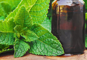 Peppermint Oil in Hindi