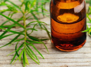 Tea Tree Oil in Hindi